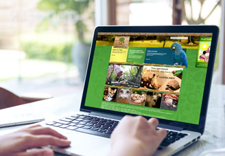 Sao Paulo Zoo website lifestyle